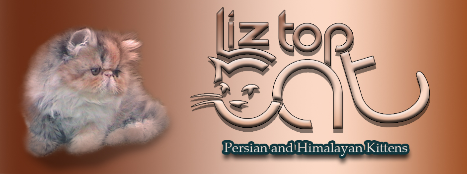 Himalayan Kitten next to Liz Top Cat Logo